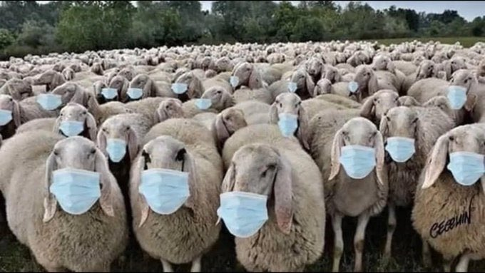 @CFRAOttawa audience waits for #Casedemic fear porn session. #sheeple