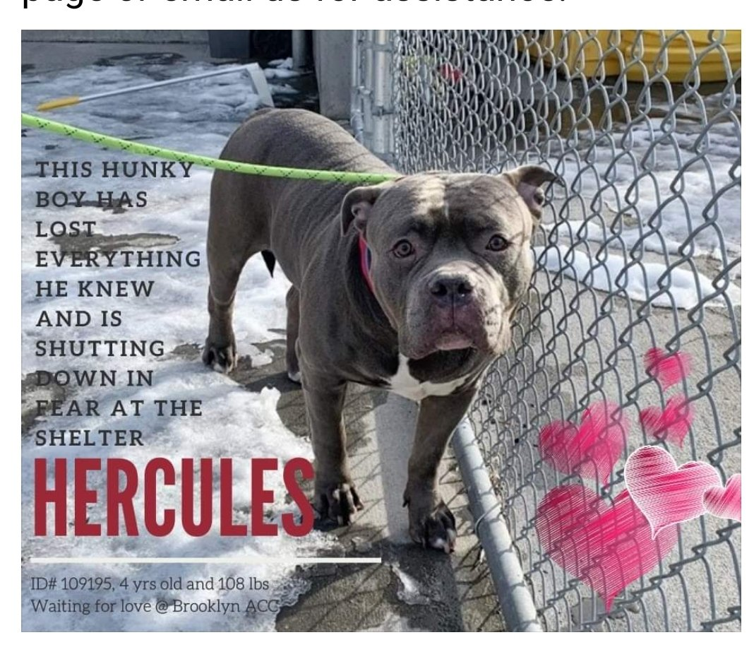 SADISTIC EVIL POFS NYC DOH COMMISSIONER FAKE DOCTOR CAUSE DOCTORS SAVE LIVES NOT TAKE THEM   ISSUED A EUTH COMMAND HERCULES   Pofs owner Arrested terrified Hercules dragged to SADISTIC NYC DOH COMMISSIONERS DEATH CAMP  HE BIT ONE OF THE UNQUALIFIED STAFF NAZI'S HE 'S TERRIFIED