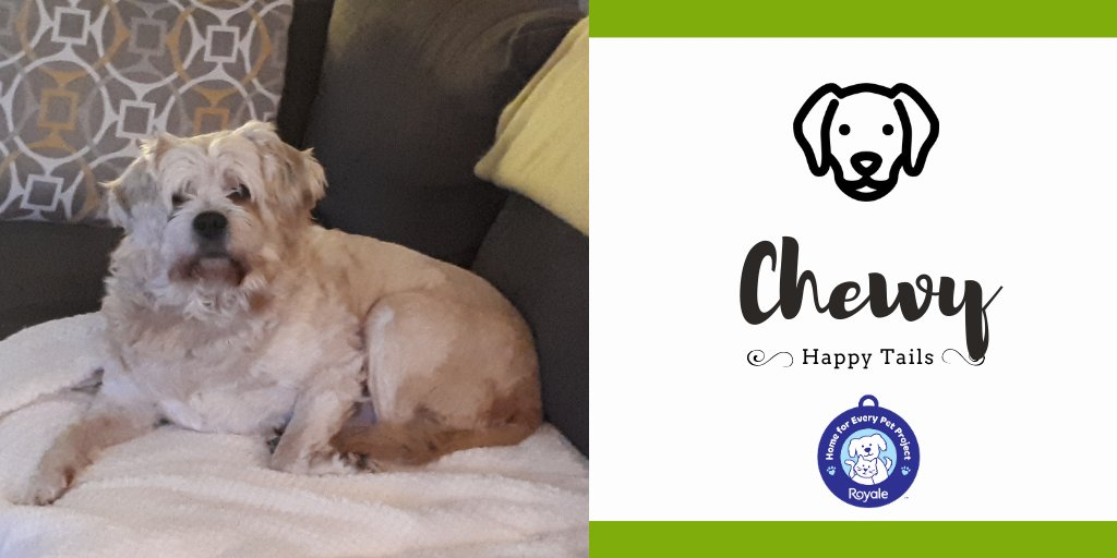#HappyTails Presented by ROYALE® Chewy. It's truly amazing how quickly he has settled in. He has already reserved his own corner of the couch with a cozy blanket and pillow and knows exactly where his treats are kept after he comes in from a walk.
