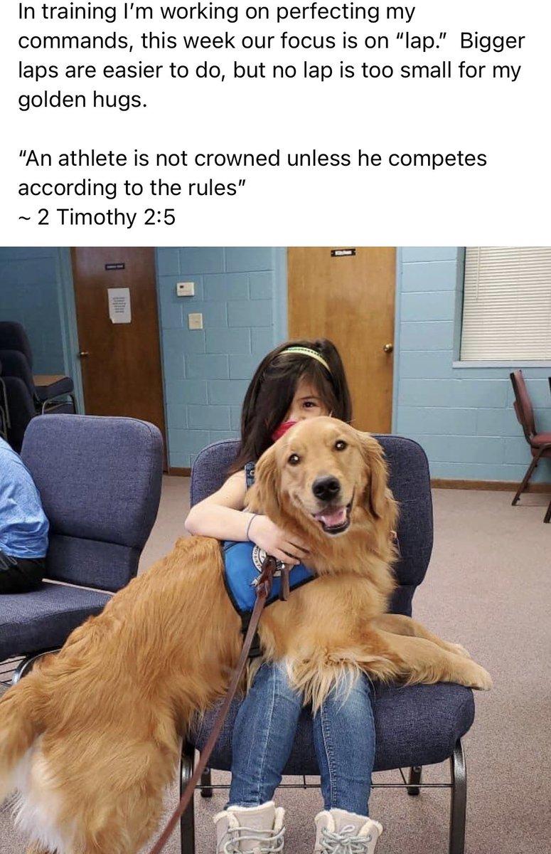 Love this Julia Comfort Dog!  #comfortdogs #dogsoftwitter #tuesdayvibe