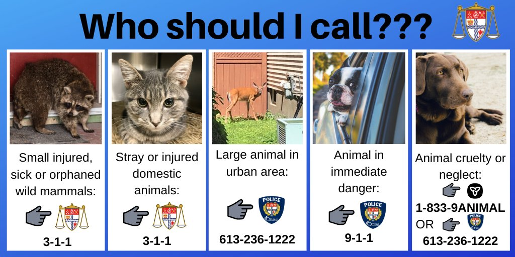 Replying to @OttawaBylaw: Make the right call when you see an animal in distress. #OttCity