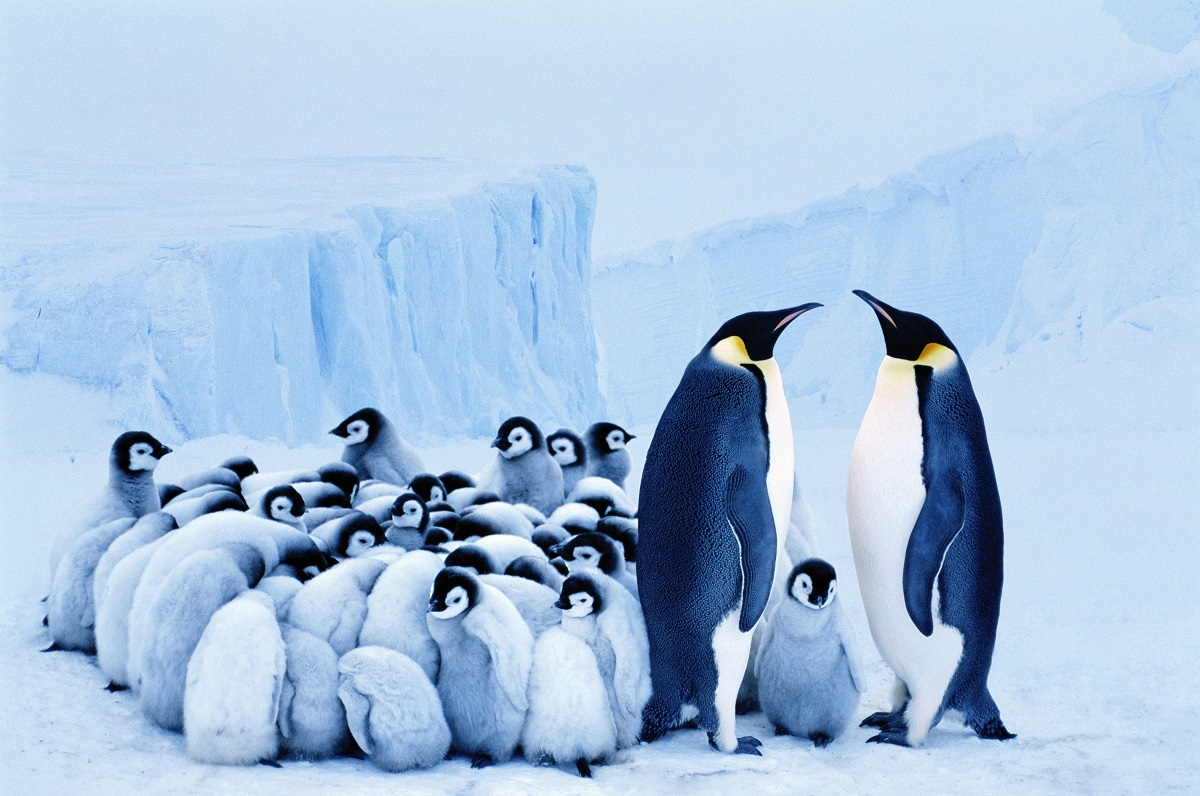 Penguins save energy by huddling together to keep out cold air. You can save on your energy at home by blocking gaps arounds doors & windows to stop hot air entering your home. Check our #Summer guide for tips to beat the heat and save energy and money: