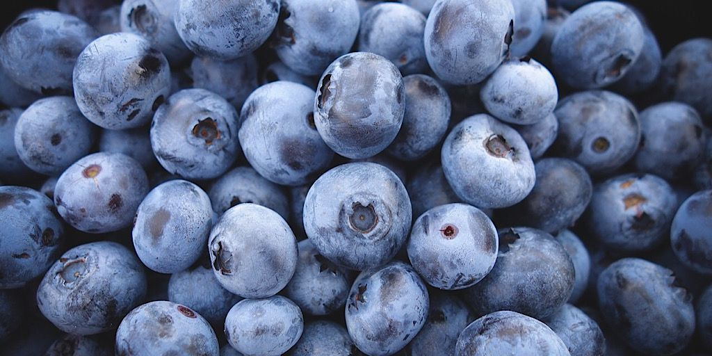 Blueberries are first picked by hand to gather the best of the early fruit. Later, if the fruit is to be mechanically harvested, a harvesting machine goes through the field & gently shakes each bush so only the ripe blueberries fall off.   #berries #antioxidants  #HealthyEating https://t.co/n6mrbFutwZ