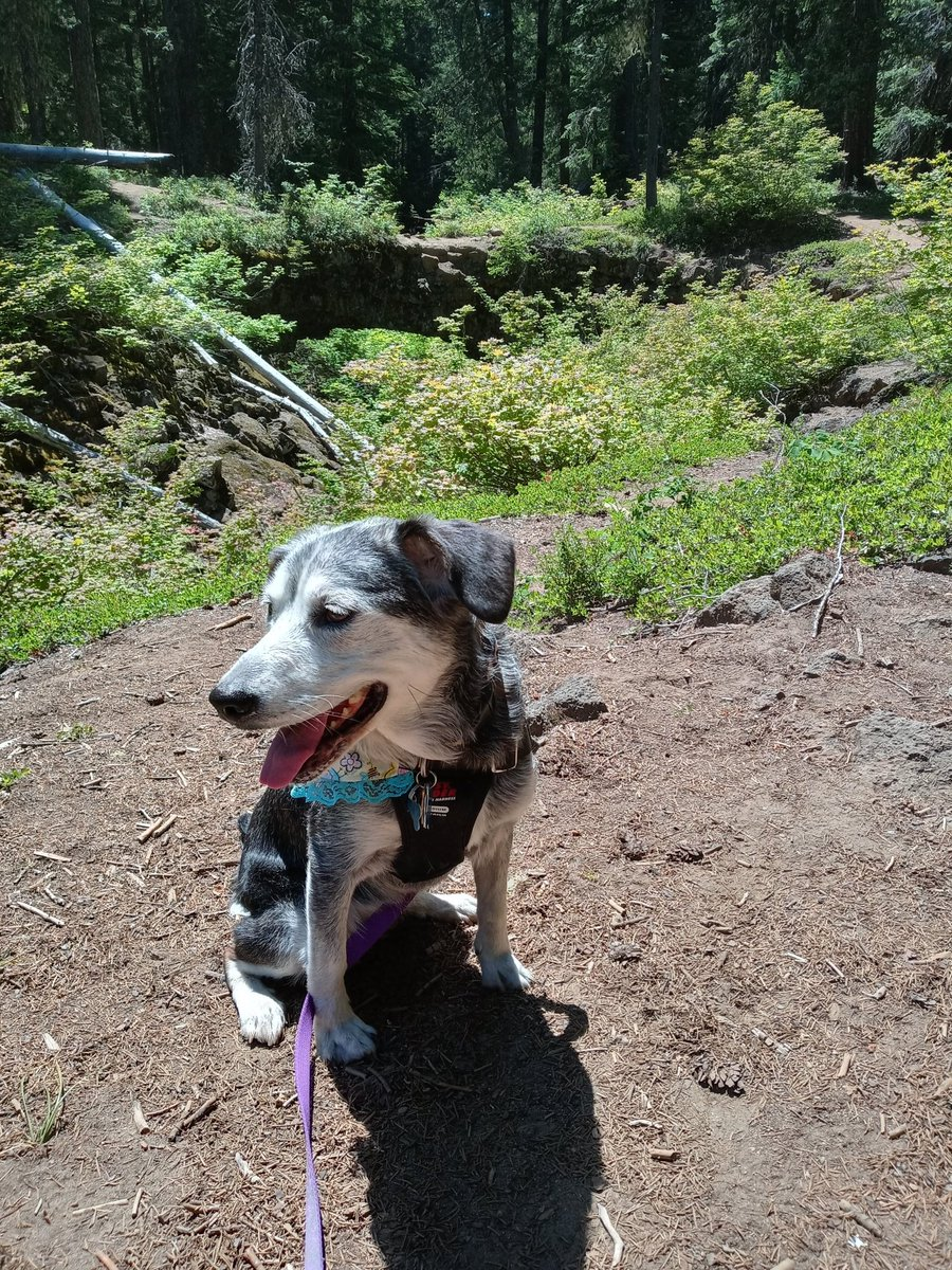 Lily #throwback in our trip to Mount Adams.