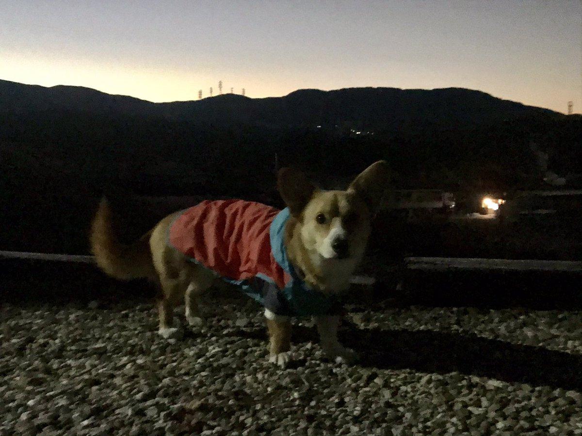 おはようございます!快晴の恵那です☀️気温は−8℃とこの冬一番の冷え込みに🥶岳もカッパをウインドブレーカー代わりに町内をグルッと散歩🐾日中は気温も上がるかな🤔今日もよろしくお願いします😊 https://t.co/eK3Beiji14