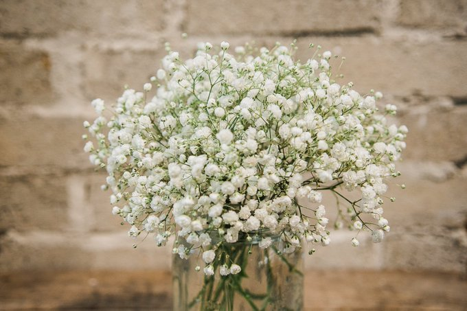 another positivity thread! what's your favorite flower?  i'll go first! mine is baby's breath :) https://t