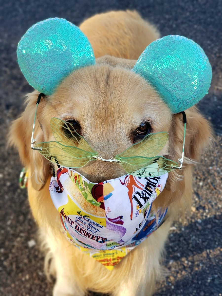 """🧚Fairies & #facemasks. Fantasy & reality. As a complicated, versatile🐕🦺K9, I can """"clap"""" my paws & believe in both at the same time. #WearAMask  a life.  #MaskUp #SocialDistancing #washyourhands #AvoidCrowds #COVID19 #Disney #Tinkerbell #PeterPan #foodallergies #dogsoftwitter https://t.co/qsaBrn5FDy"""
