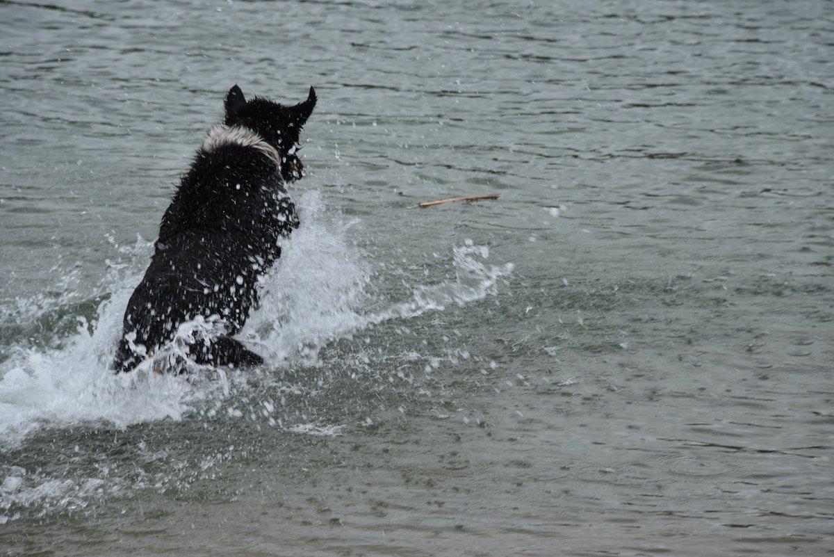 #Happiness is contagious! I wasn't in the best mood when I sat on a beach and watched the #cute #dog full of joy and enthusiasm jumping into waters to get the stick his owner was throwing him. In no time I was #laughing too. #PositiveVibes #Inspiration #Wellbeing