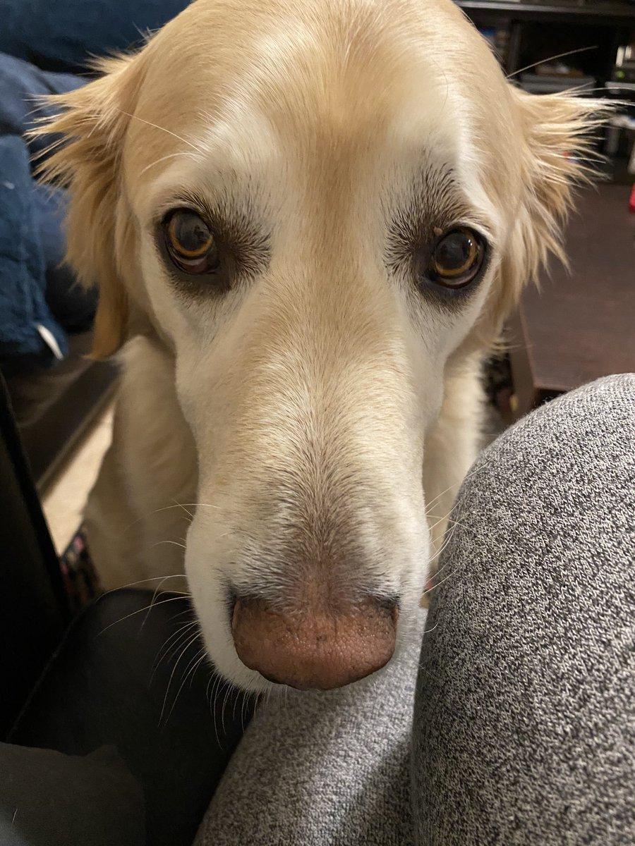 Walkies please mums #dogsofinstagram #dog #goldenlove #puppy #instadog #doglovers2020 #retrieverspage #dogoftheday #pets #doglovers #love #doglife #puppies #pet #cute #puppiesofinstagram #doggo #ilovemydog #petsofinstagram #animals #dogslife #grc #dogsoftwitter #dogsarelove