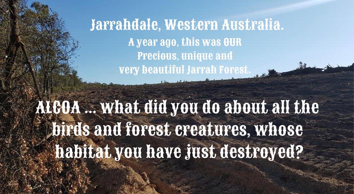 #deforestation #ecocide #ALCOA an American company is devastating OUR #WestAustralian #Precious and #unique #Jarrah #Forest This deforestation has got to stop! #ColinHAbbott #Jarrahdale #WA #Australia @jarrahdale1 @jarrahdale482 #ColinAbbott @Mundlimup @JoJomills13