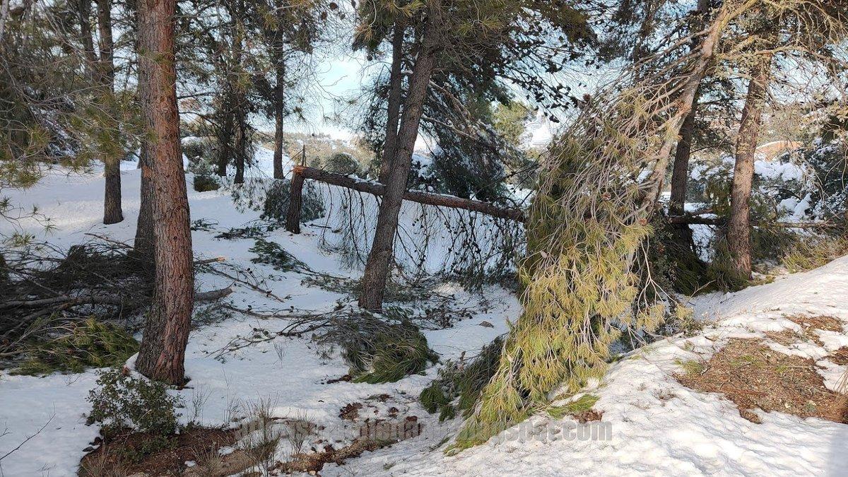 #Toledo  MEDIO AMBIENTE: Arrasada la vegetación de la 'Fuente del Moro' por la borrasca #Filomena Uno de los pulmones de la ciudad entre los barrios de #SantaBarbara y #Benquerencia #Poligono  No se olviden las autoridades Locales y Regionales