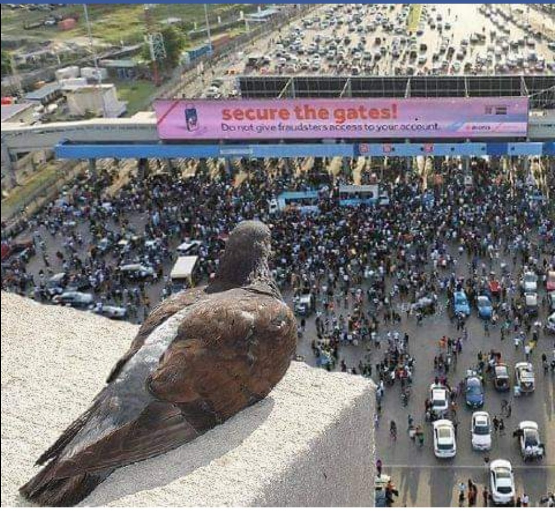 Wow, it's 3 months already...  Yet no one can answer, who ordered the shooting of #LekkiMassaccre  This bird witnessed it all but someday soon, it shall fully be revealed in the open.   #EndSARS
