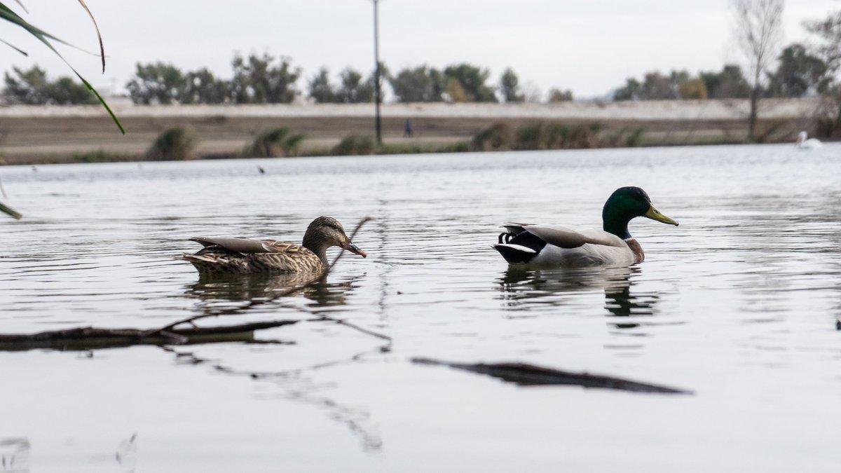 I sent duck pics pls respond #PhotoOfTheDay #nature