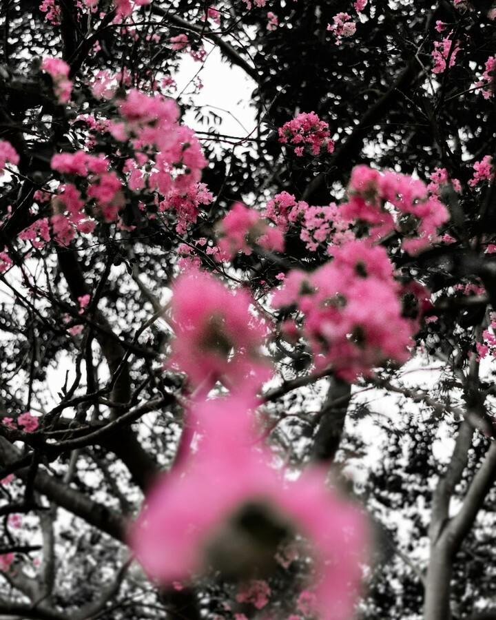 Eu não gostava muito de fotografar flor, agora eu curto mais.  Na praça do navio. . . . #tree #nature #trees #photography #landscape #naturephotography #rural #sky #forest #green #travel #nikonistas #art #naturelovers #photooftheday #beautiful #ig #taqua…