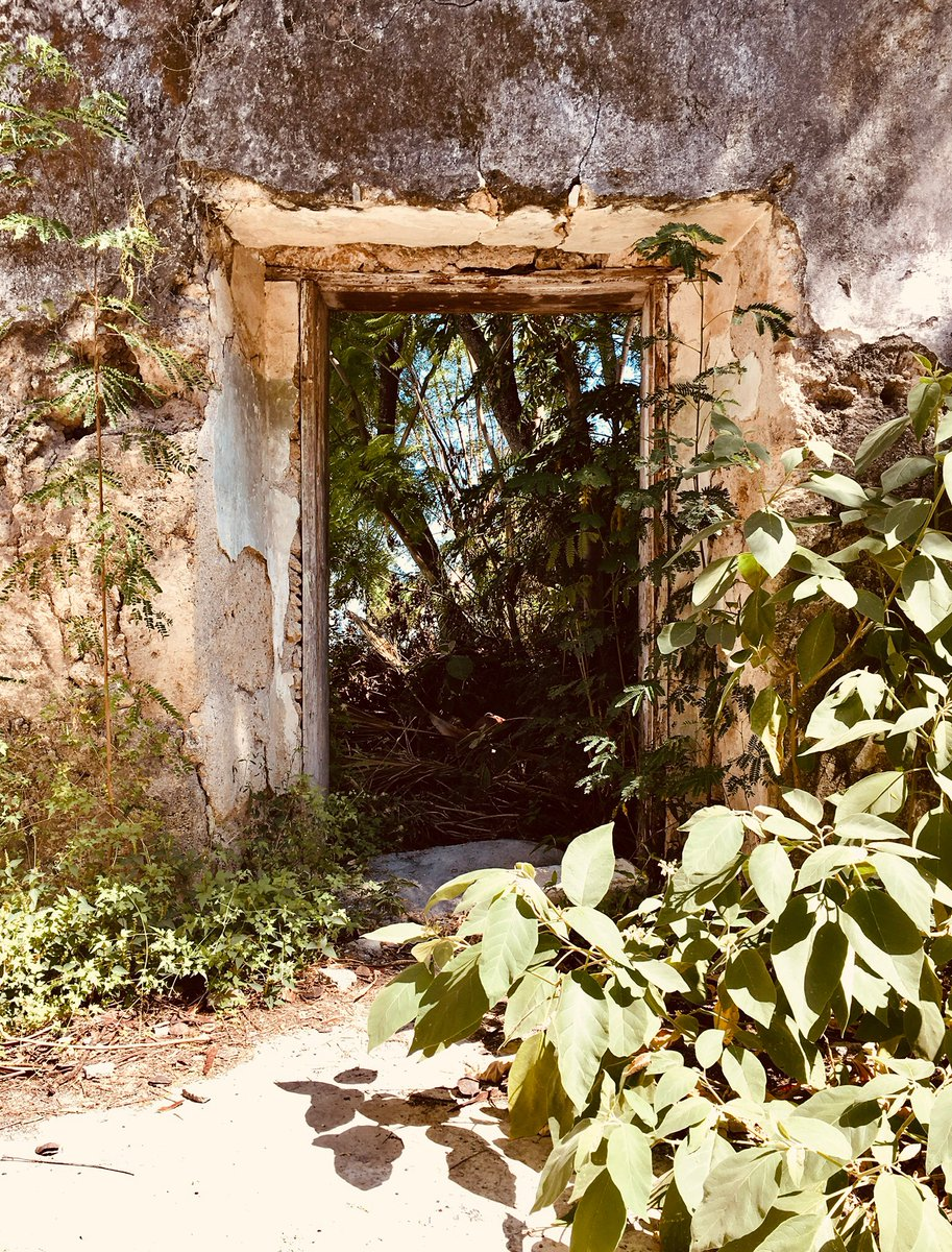 Architecture Legacy & Natural Life🌿🌎🚪⏳  #architecture #architecturephotography #nature #naturelovers #photography #photooftheday #naturephotography #Legacy #History #culture #Mexico #staystrong #StaySafeStayHealthy