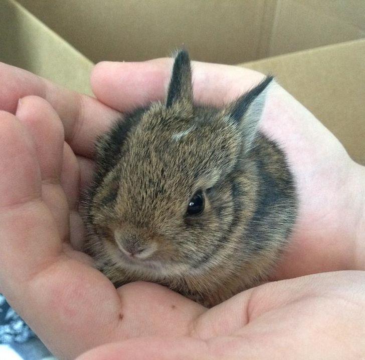 Bunnies (@RabbitEveryHour) on Twitter photo 2021-01-20 09:31:07