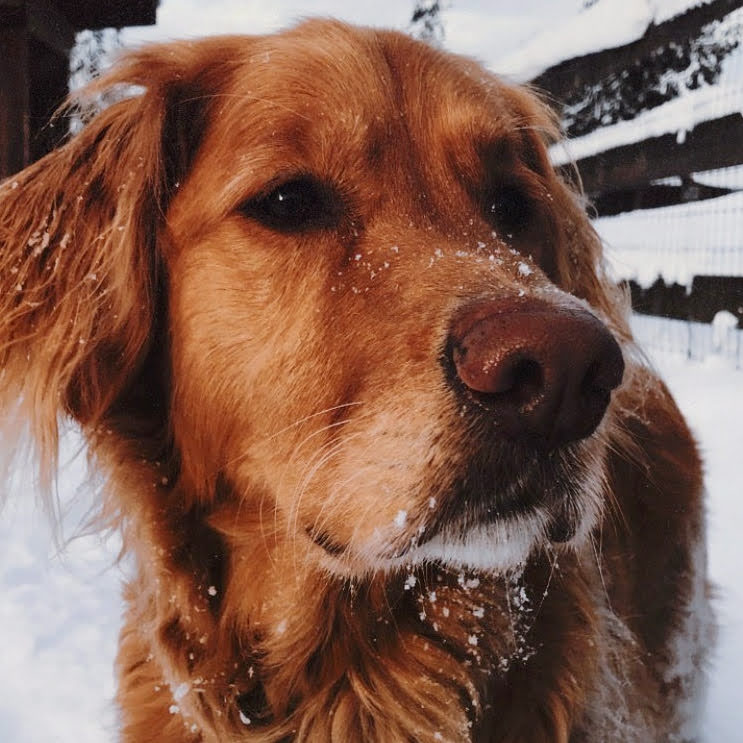 Ok, so I'm too insecure to participate in #hispanicmcyttwtselfieday, but I also want to contribute something so here's my dog. -❄️🔥