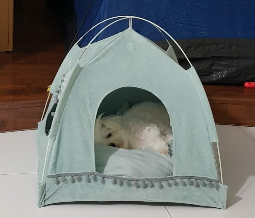I BOUGHT MY DOG A TENT LOOK