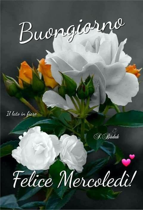 Buongiorno Rosy