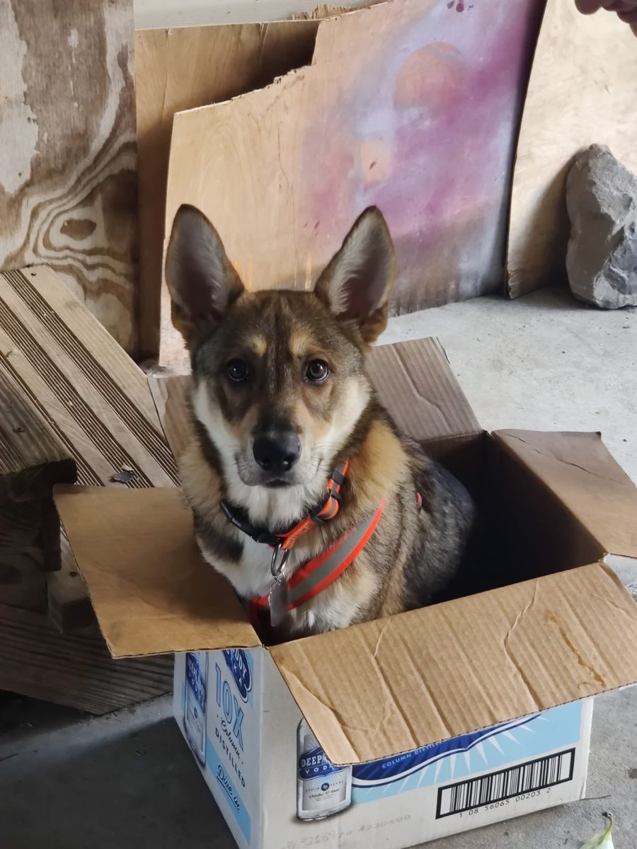 SMH I WANNA POST A SELFIE BUT IM TO SCARED SO YALL GET MY DOG IN A BOX —-#hispanicmcyttwtselfieday