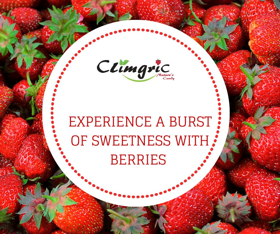 With a handful of strawberries, you will experience a burst of sweetness in your mouth. Refresh your memories with berries. Have fun enjoying Nature's candy!  #strawberries #hydroponics #berries https://t.co/2TuOsBI8jj