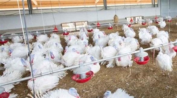 #كوريا_الجنوبية تتخلص من 19 مليون طائر بعد تفشي #إنفلونزا_الطيور