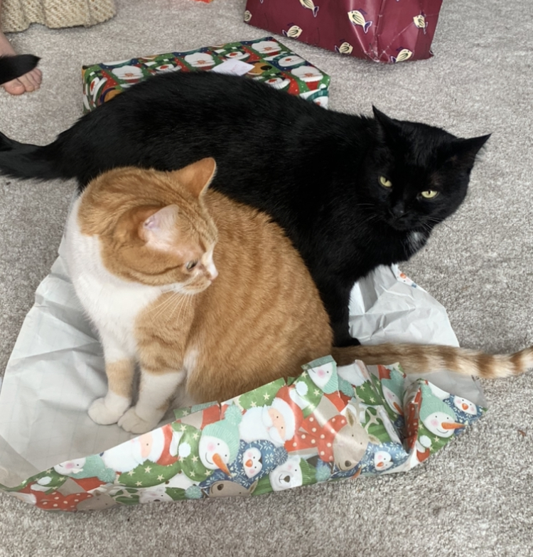 How to wrap a cat or two for Christmas. #Cats #CatsofTwitter #Caturday