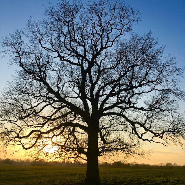 Happy Wednesday #WorcestershireHour 😊 On this wet & windy day here's a lovely #wintry #WORCESTERSHIRE  #Oak #Tree pic to brighten our day - taken recently by one of the @WorcesterTIC team #Worcester #WorcestershireHour #wednesdaythought #WednesdayMotivation