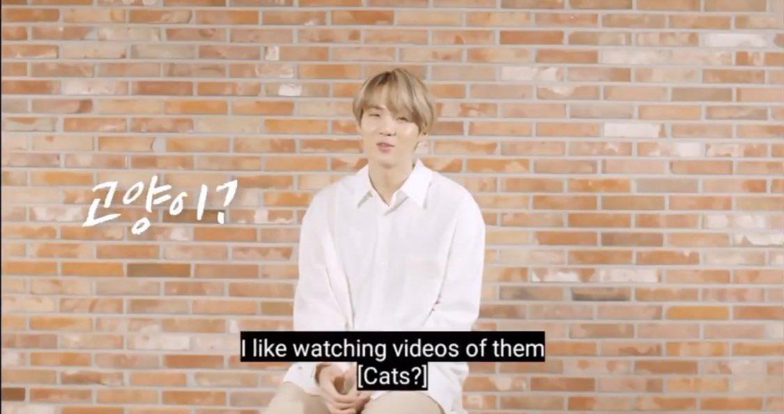 📸| Pergunta: Gatos?  🐱: Gosto de assistir aos vídeos deles!   #슈가 #방탄소년단슈가 #Suga #BTS @BTS_twt ©almostdita
