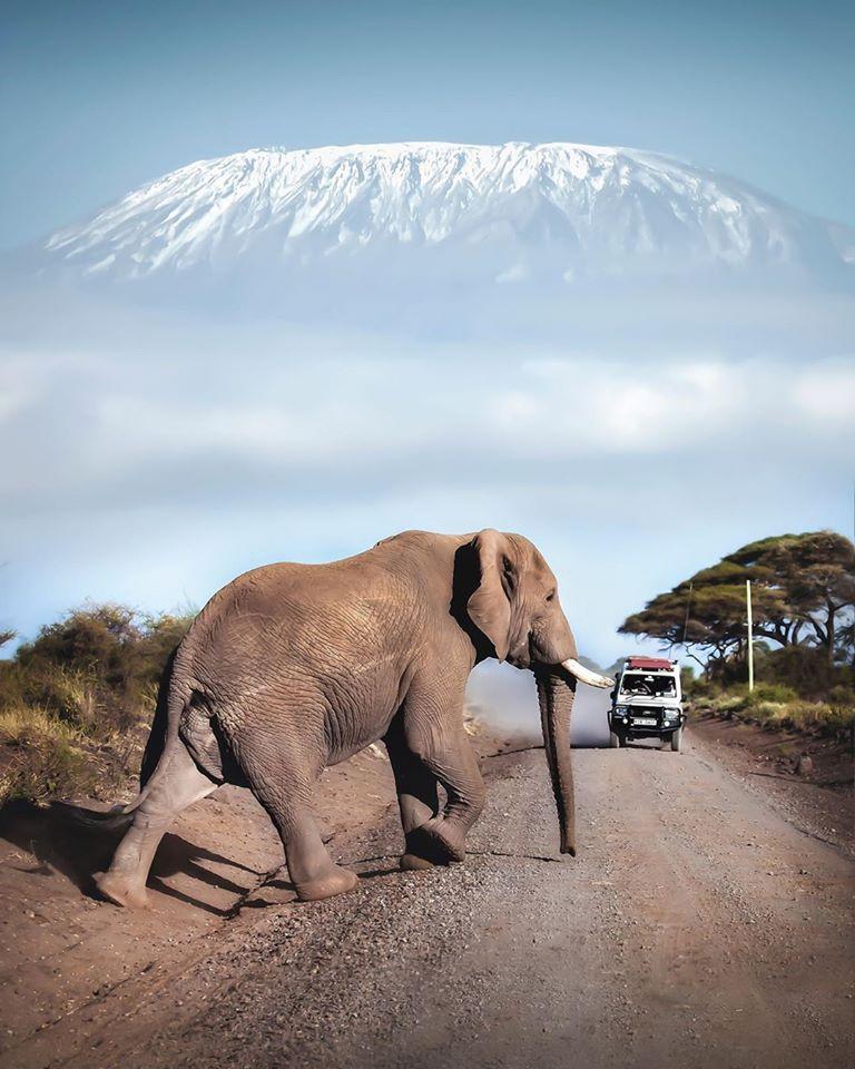#elephant #Kenya #Africa #photograph #NaturePhotography #wildlifephotography  (David M Rule)