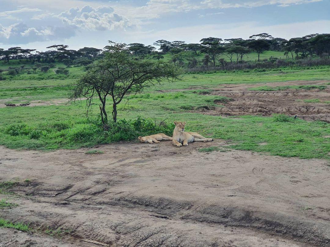 Adventure is worthwhile in the Endless plains of Serengeti.🌝  #travel #adventure #wildlife #nature #explore #discover #africa #luxurytravel #luxuryhotel #travelblogger #tourism #wanderlust #landscapes #traveltheworld #tourguide #holidays