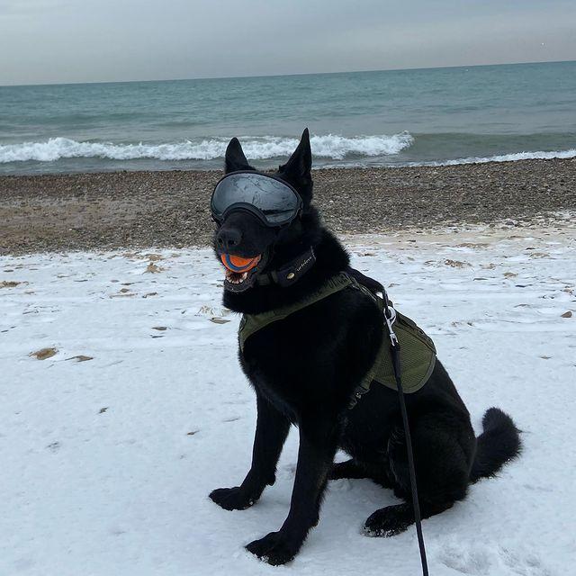 Ritta having a ball on the white sandy beaches of Northern Indiana. Sorry I meant Snowy beaches of Northern Indiana, but she still had a ball. . . #gsd #germanshepherd #dog #blackdog #blackgermanshepherd #whendoesitstop #Pardons