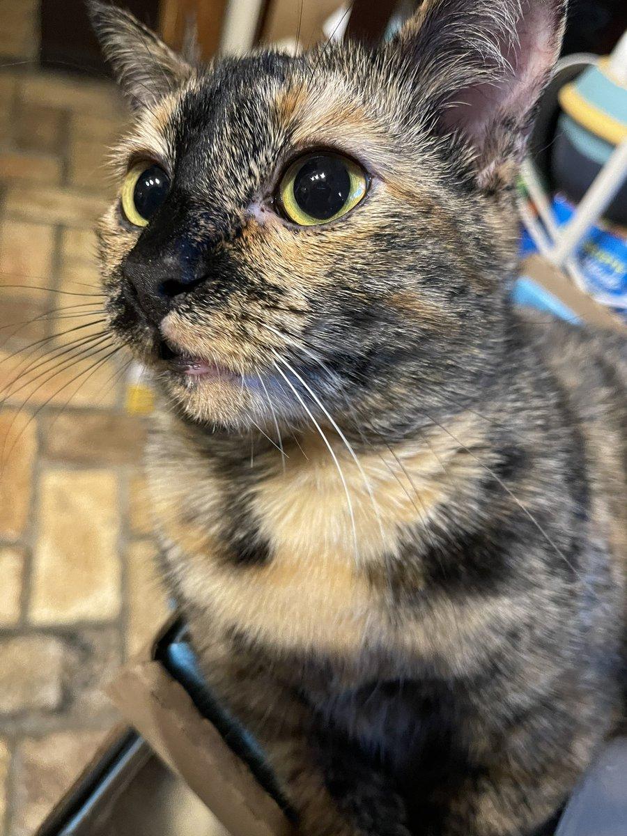 🎉 Happy Inauguration Day! 🎉 #CatsForBiden #InaugurationDay #CatsOfTwitter #cats #WednesdayMotivation #MovingForward