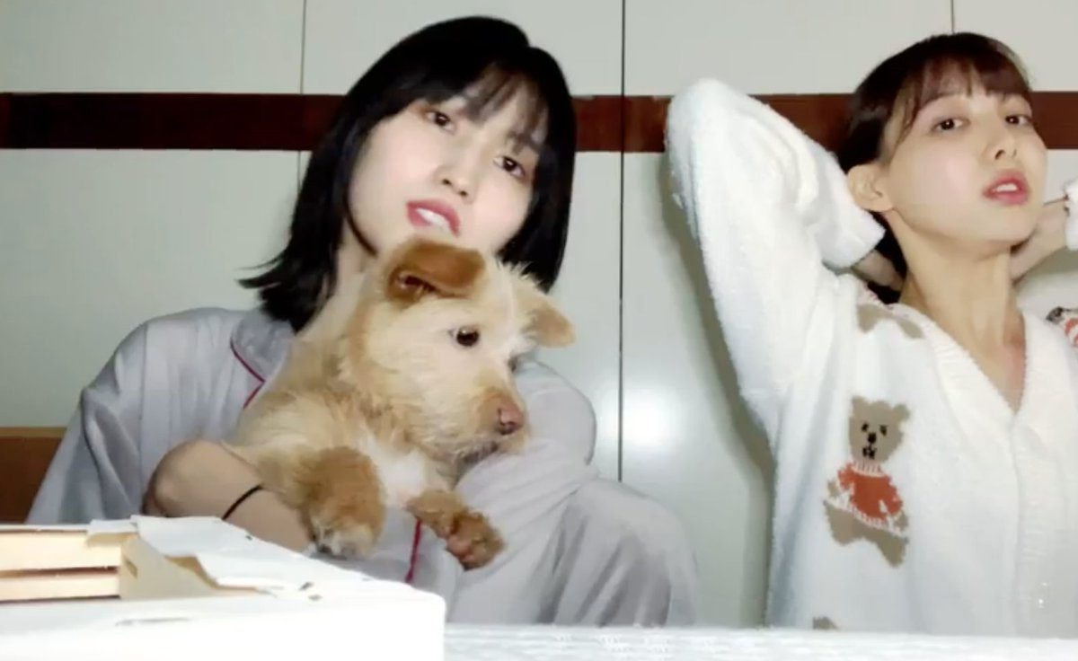 Momo & Nayeon started a vlive to tell us that Momo has a new dog now   He's about 4 months old and Momo is calling him Dobby for now but wants ideas from Onces for a new name