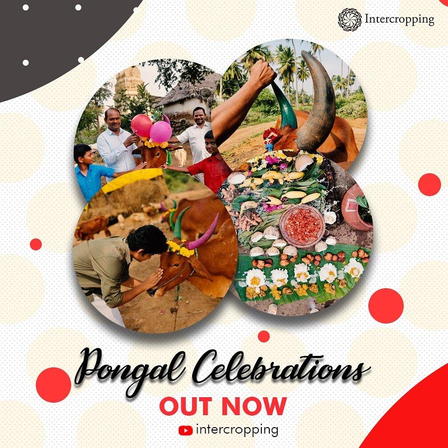 Pongal celebrations... #Pongal2021 #pongalfestival  #pongalopongal #Pongal #pongalholidays #YouTuber