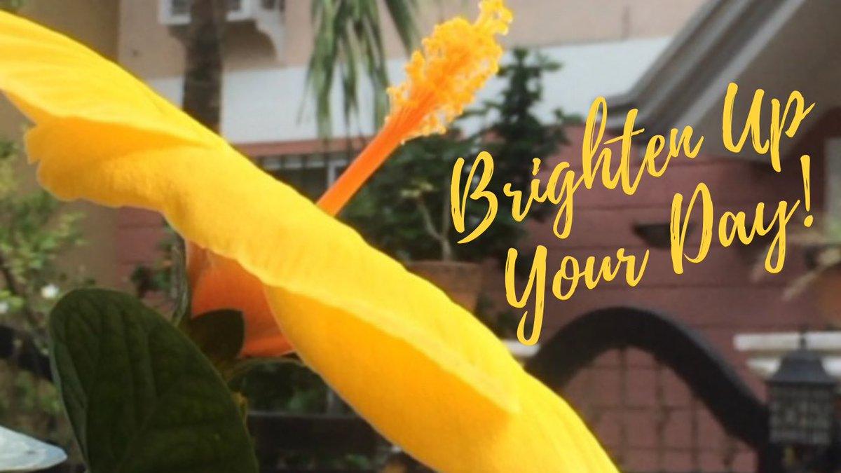 Watch  to brighten your day! 🌝  #nature #beautifulnature #stressrelief #Flowers #flowerlover #powerofflower #smallyoutuber #smallyoutubercommunity #TwitterNatureCommunity #TuesdayFeeling #beautiful #amazingnature #creatorontherise