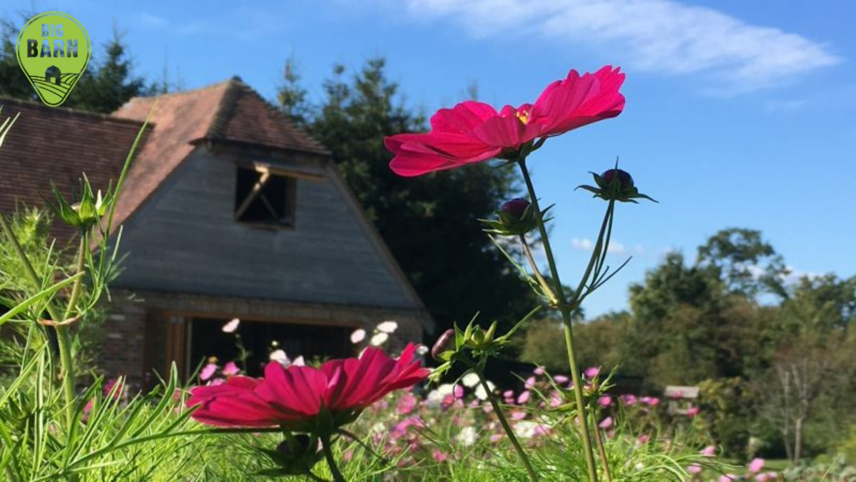 Say hello to @PitfieldBarn, the latest addition to the ever growing BigBarn family! 👋  They grow and sell gorgeous seasonal flowers and are based just outside the village of Hurstpierpoint, near Brighton.  Visit their page here;   #BritishFlowers #Flowers