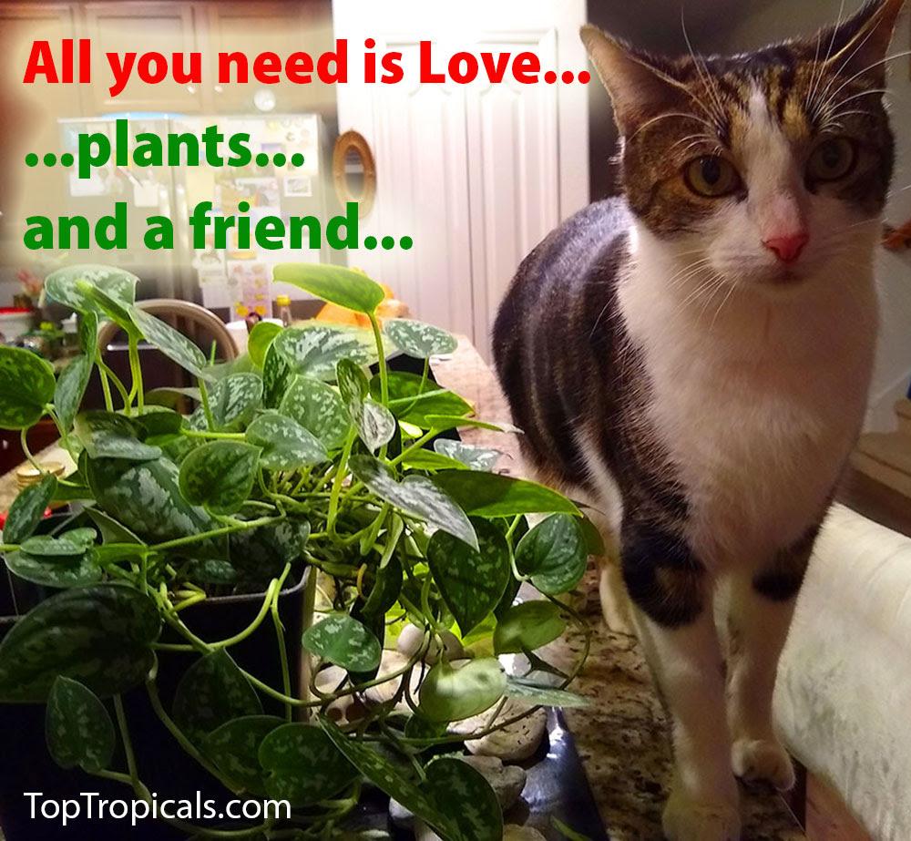 ..A true friend overlooks your broken fence to admire your flowers...   #tropicalplants #rareplants #exoticfruits #floweringtree #fragrantflowers #gardening  #rarefruittrees #spices  #peoplecats #WednesdayWisdom