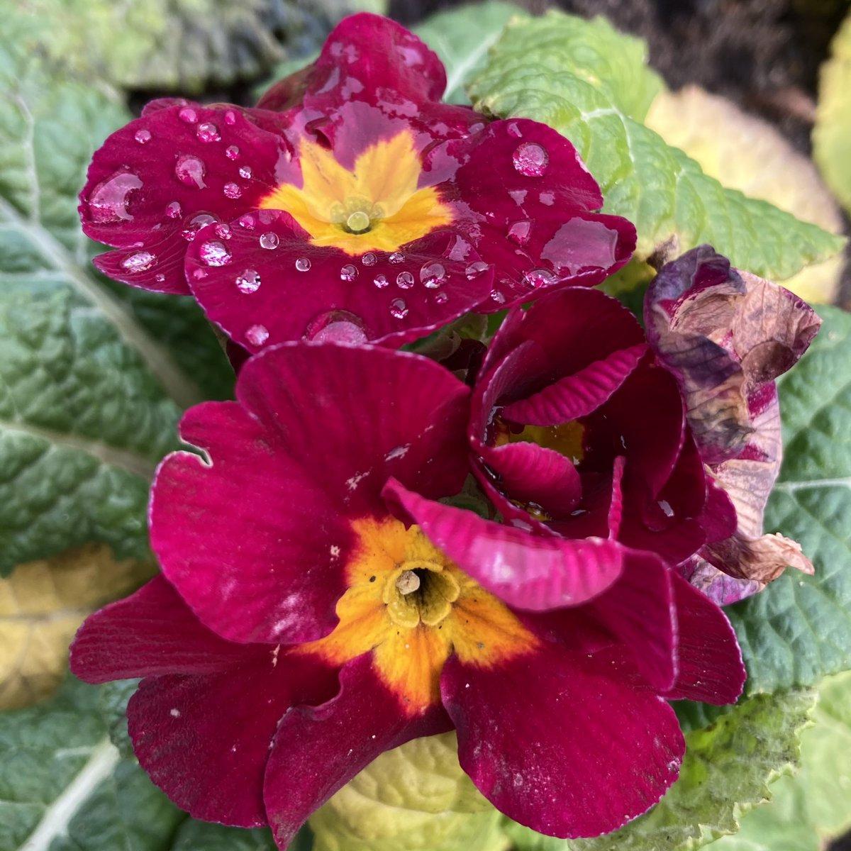 #TwitterFriends a little bit of brightness on a dark day. Enjoy. #Nature #Flowers #TomorrowWillBeABrighterDay #photo