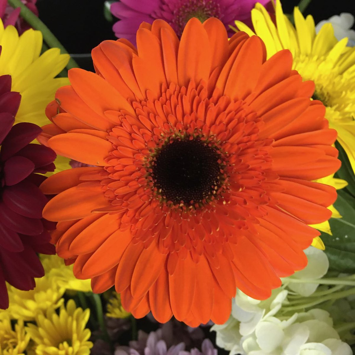 """Orange flowers symbolize feelings of enthusiasm and excitement. Such energetic blooms would be the perfect way to tell someone """"good luck"""" on a new job or """"congratulations"""" on a recent accomplishment. . . #orangeflowers #flowers #excitement #congratulations #lilygrassokc"""