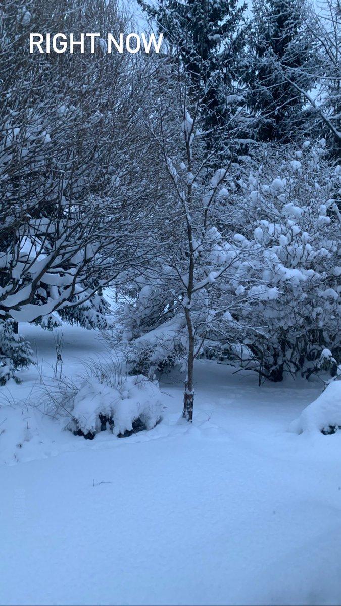 #nature #now #snow
