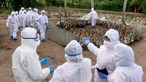 Government says, #AvianInfluenza confirmed in six States for poultry birds. These states are Kerala, Haryana, Madhya Pradesh, Maharashtra, Chhattisgarh and Punjab.  #BirdFlu