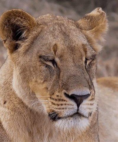 #Lionesses