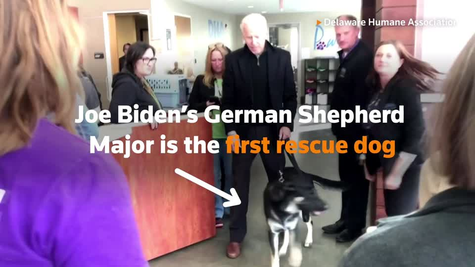 The arrival of the Bidens and their dogs Major and Champ marks the return of the longstanding tradition of pets at the White House