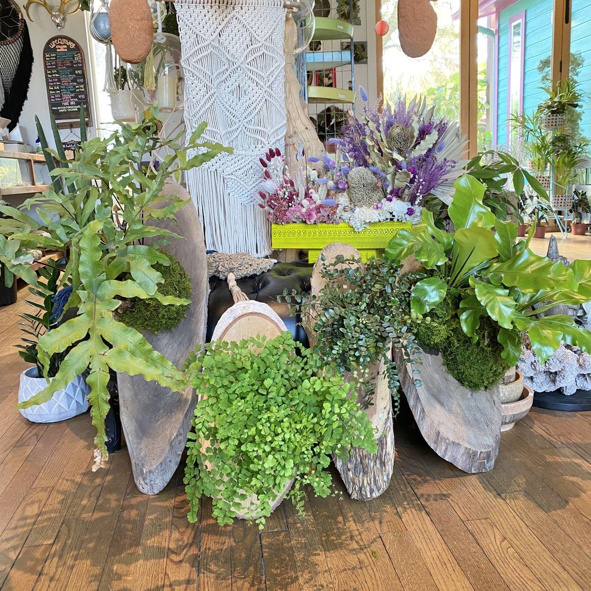 I'll take mine mounted💚  . . #mountedplants #plantpeople #plantparty #plantlover #plantsplantsplants #plantsmakepeoplehappy #plantlife #govertical #ferns #plantcollector #plantenthusiast #artisalive