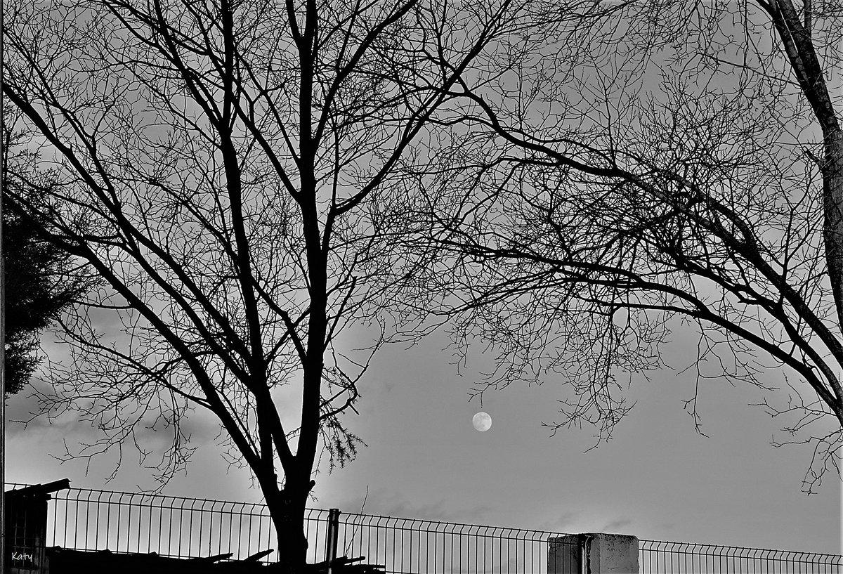 En blanco y negro #blackandwhite #blancoynegro #naturaleza  #NaturePhotography #lunes #arboles #trees