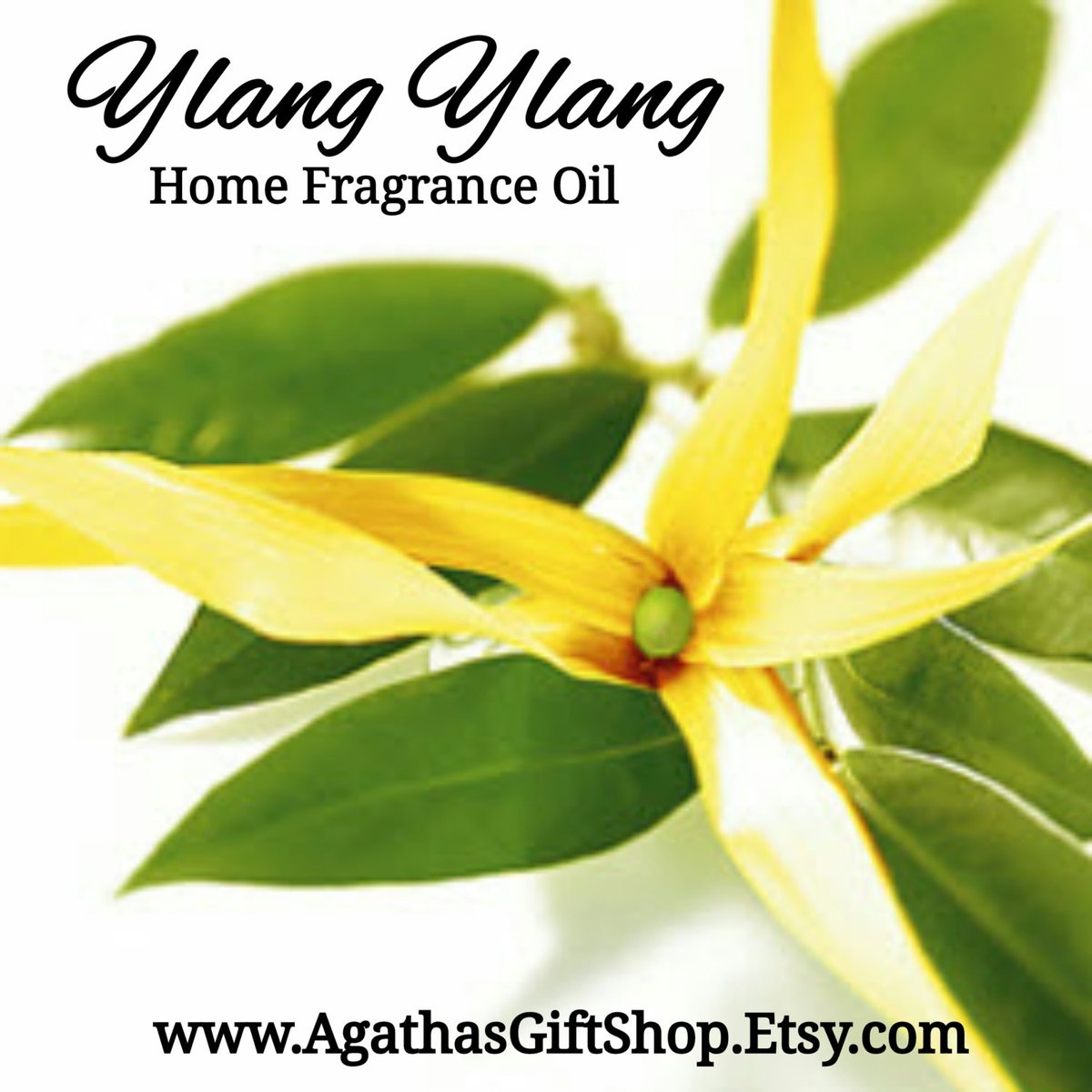 Ylang Ylang Home Fragrance Diffuser Warmer Aromatherapy Burning Oil  #HomeFragranceOil #BlackFriday #HerbalRemedies #GiftShopSale #Wedding #CyberMonday #PerfumeBodyOils #Etsy #AromatherapyOil #Incense #UpliftingScents