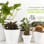 Image for the Tweet beginning: Did you know? Houseplants improve