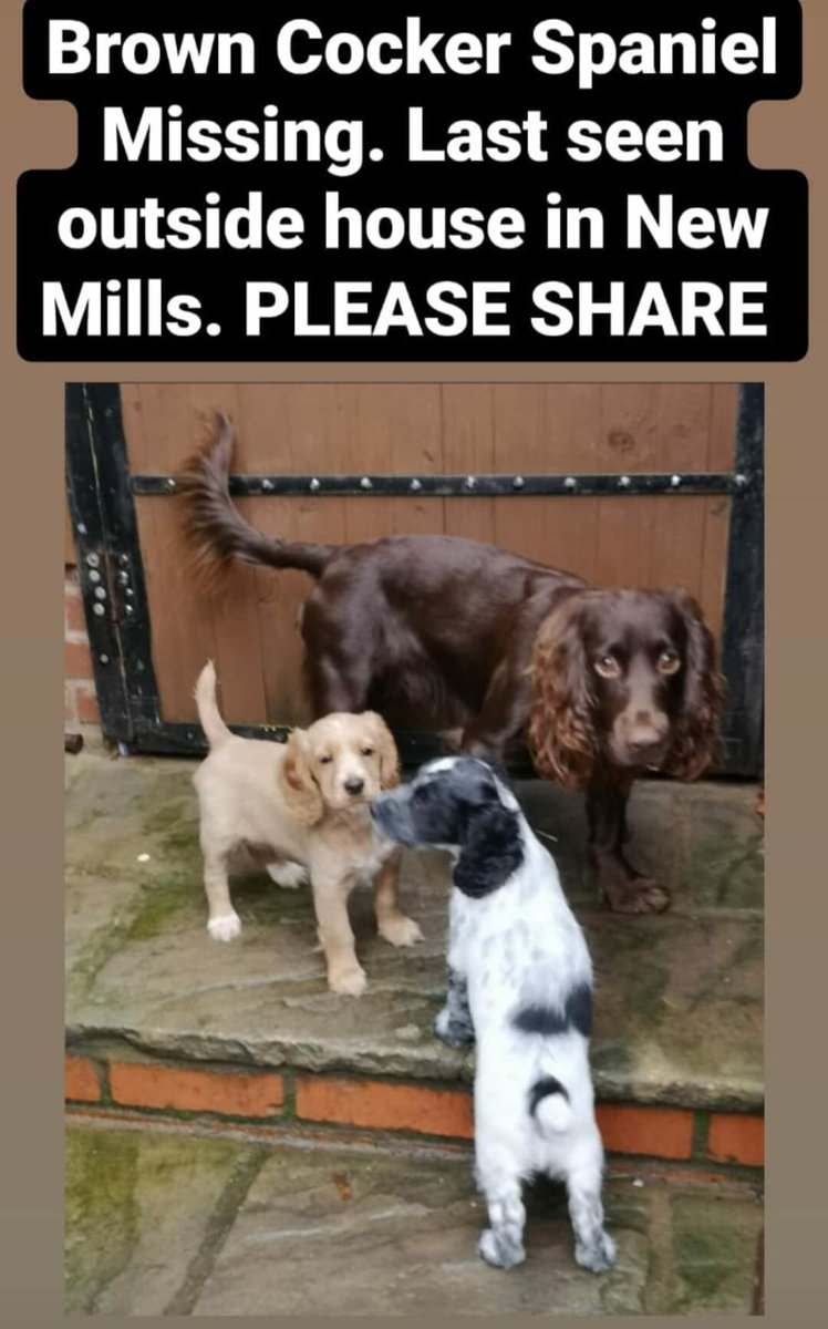 #SpanielHour   Please share - Gone #missing from #Ledbury area Many thanks! x Link below for updates    BROWN #CockerSpaniel LAST SEEN OUTSIDE THE HOUSE #NewMills   @bs2510 @gelert01 @karensarah66 @Spaniels_Rule @NewMillsFC @NewMillsSchool @NewMillsCricket