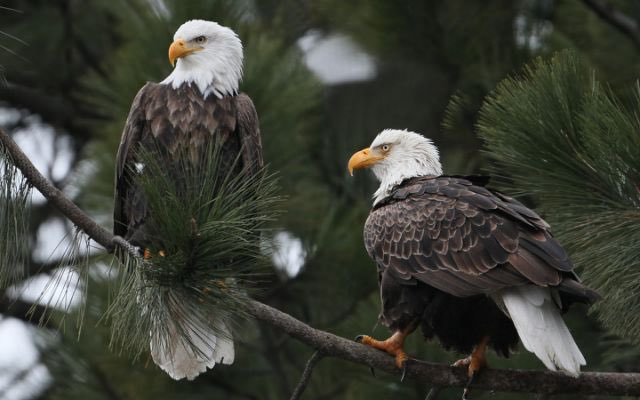 So happy we have two new eagles leading us today! @potus @vp #Inauguration2021 #america #hope #unity #itsabeginning